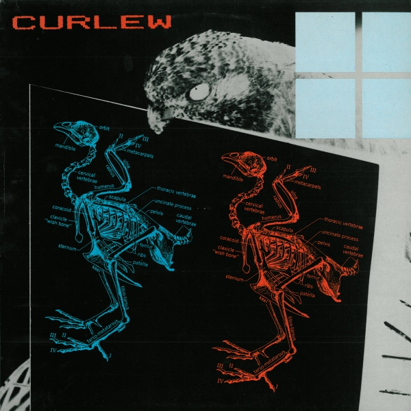 Curlew — Curlew