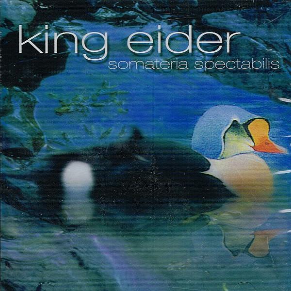 King Eider — Somateria spectabilis