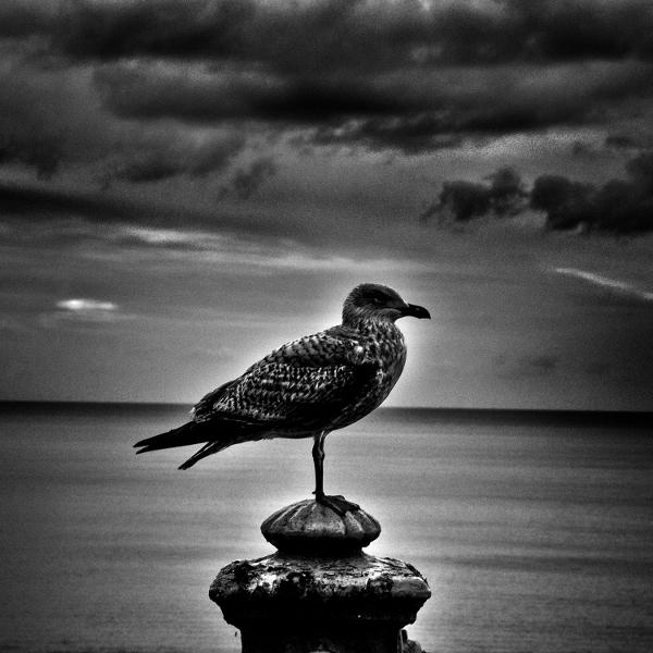 Ashley Reaks — The Earth Swan Sings Again