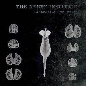 The Nerve Institute —