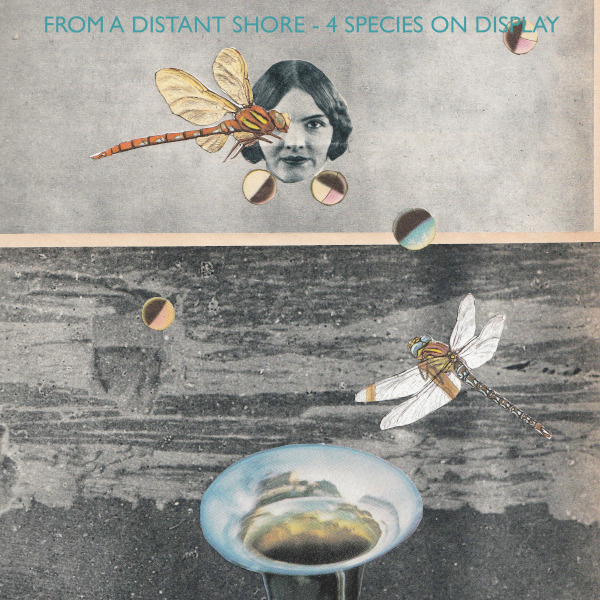 From a Distant Shore Cover art
